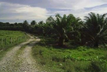 Impactos del TLC entre Colombia y Estados Unidos en el sector agrícola del Departamento de Bolívar