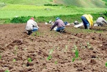 El modelo desarrollo agropecuario bolivarense en el marco de la globalizacion neoliberal y el TLC con los Estados Unidos