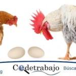 IVA al huevo y pollo costaría $ 1,3 billones a consumidores