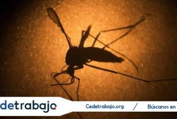 La prueba definitiva en animales que vincula el Zika con la microcefalia