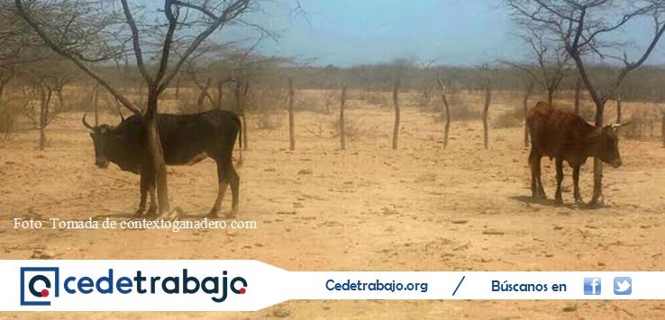 Ganaderos inconformes tras visita del presidente Santos a La Guajira
