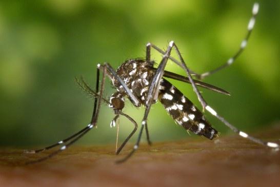 Confirmadas secuelas del chikunguña en Bolívar