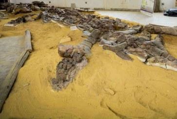 El pliosaurio más grande del mundo está en Boyacá