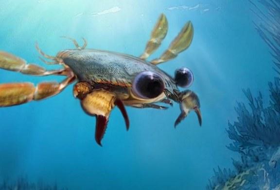 El cangrejo prehistórico que arroja nuevas pistas sobre la evolución